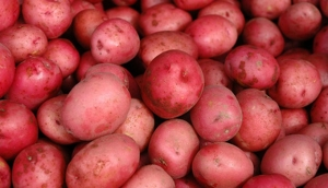 Potato Red