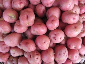 Red Potatoes New
